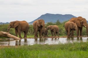 Golf in safari v Južni Afriki 5* - 7 dni